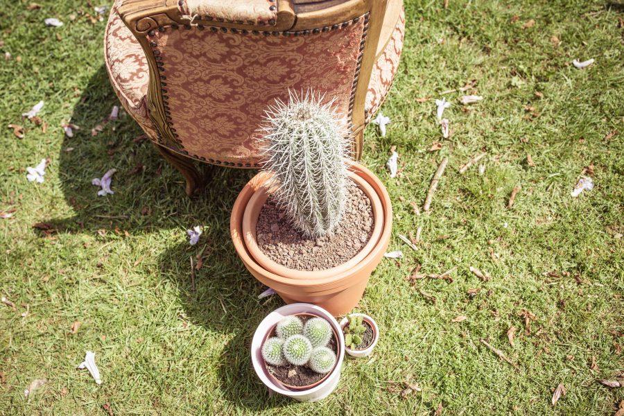 cactussen huwelijkscermoniestyling