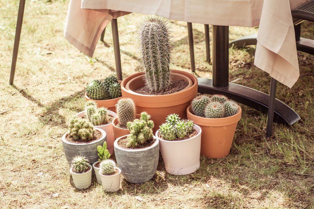 cactus bruiloft