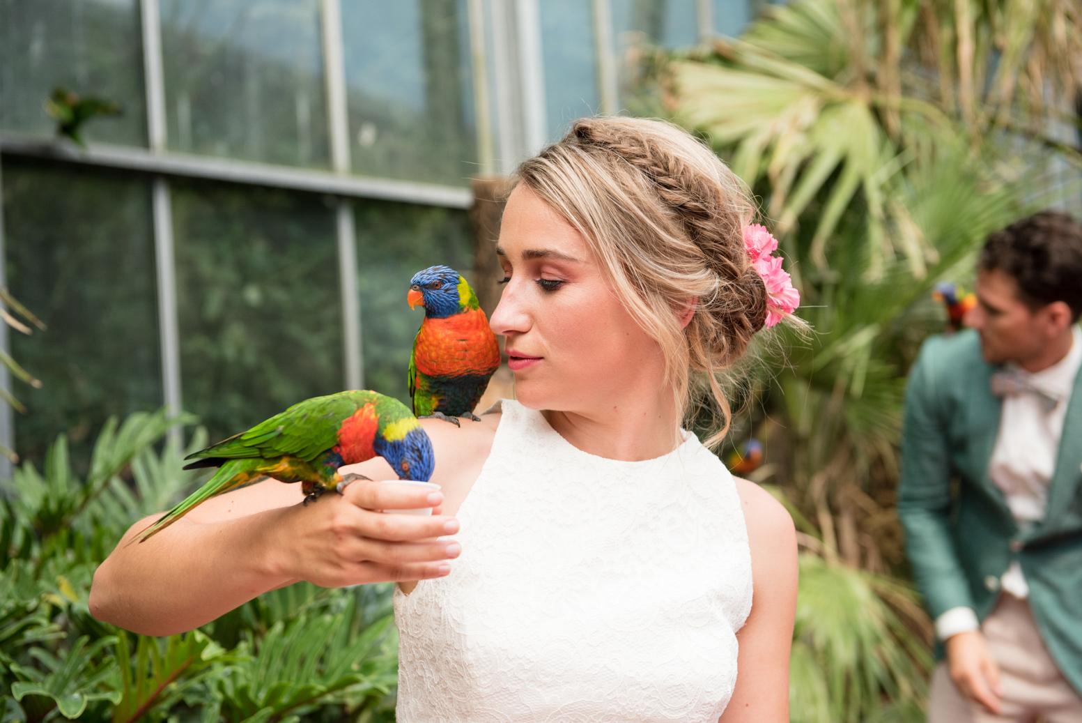 papegaai en bruid